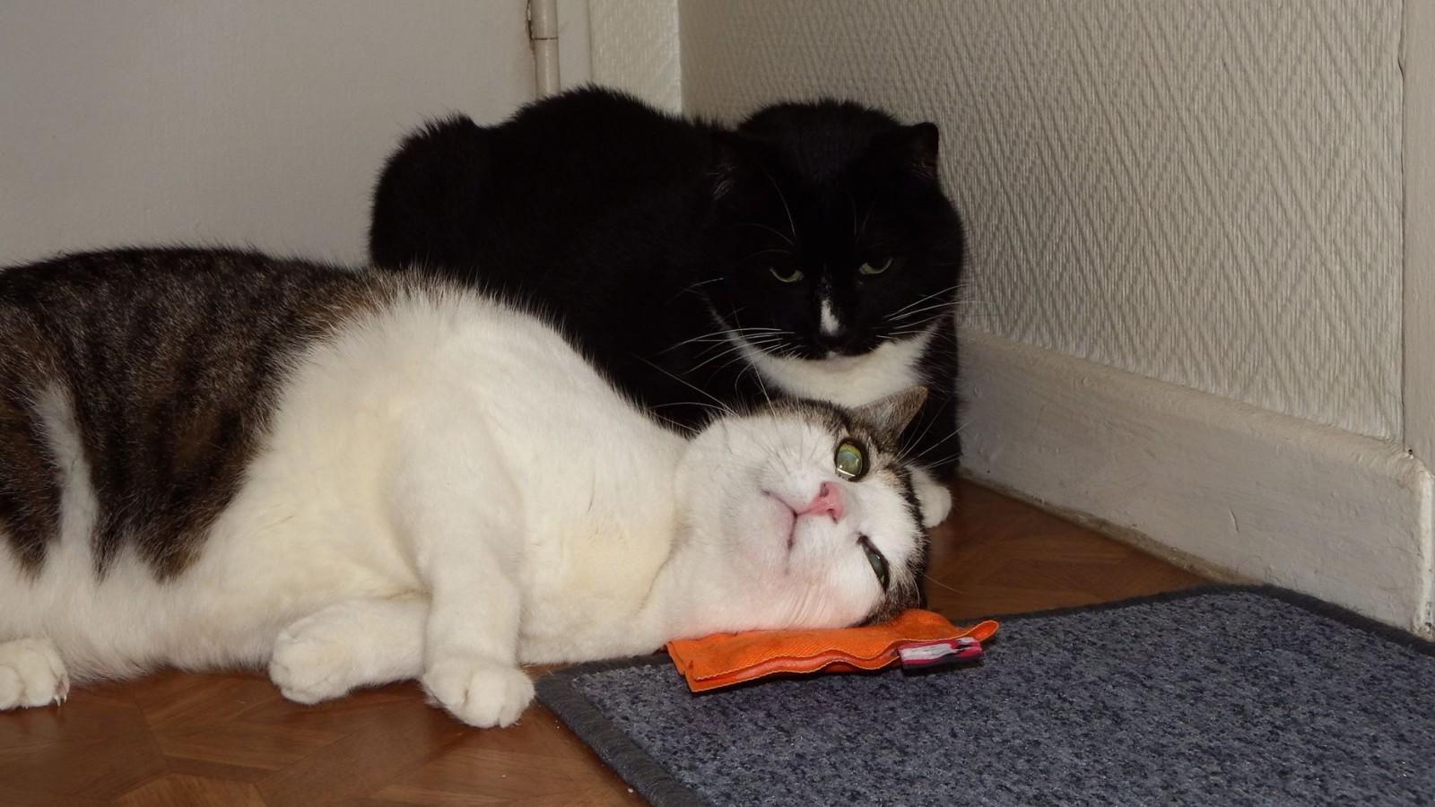 Biberon et Marlée complotent contre les humains. ©TPPCTPUC