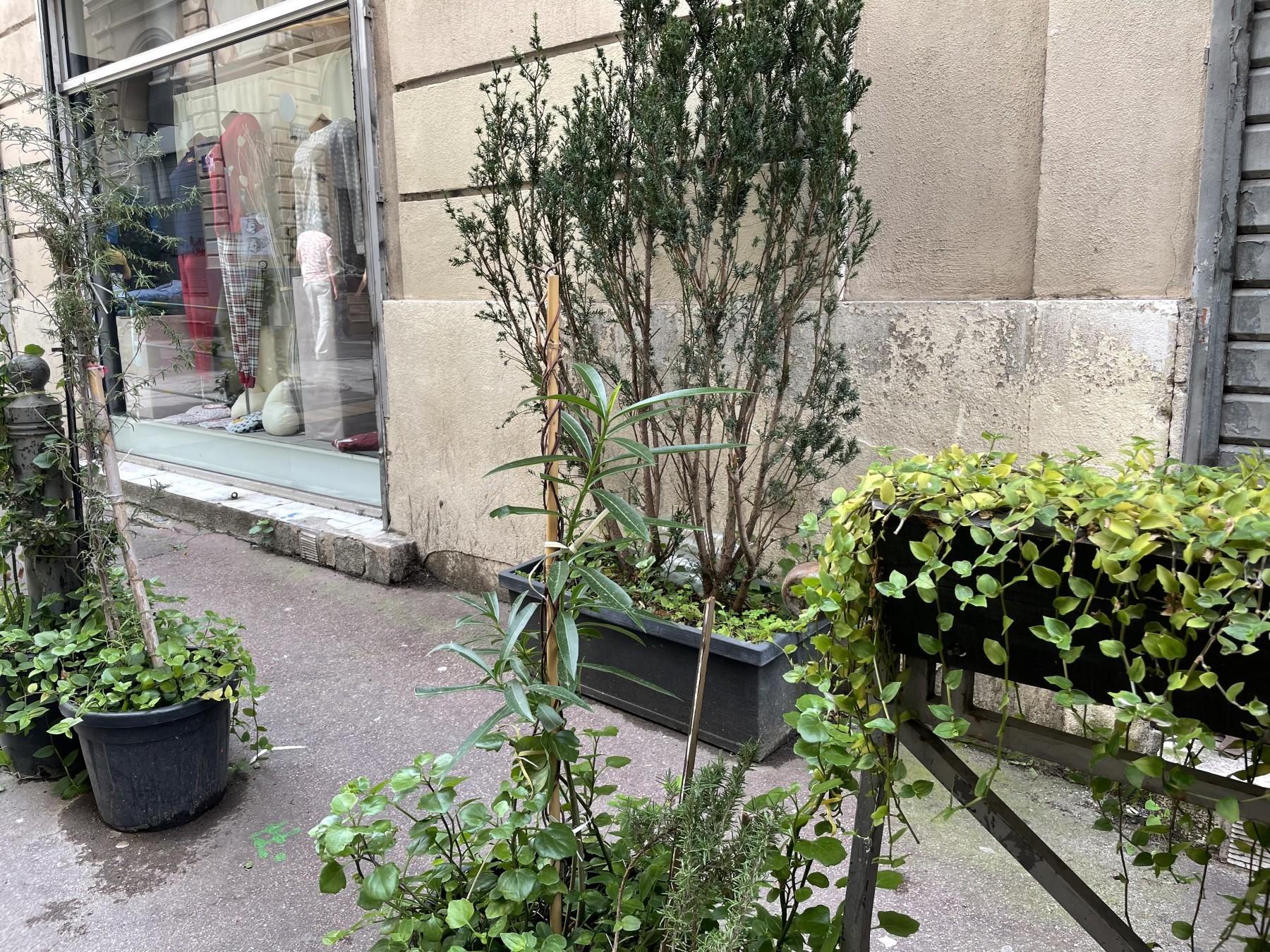 La rue Thubaneau verdoie grâce aux bénevoles. ©MD